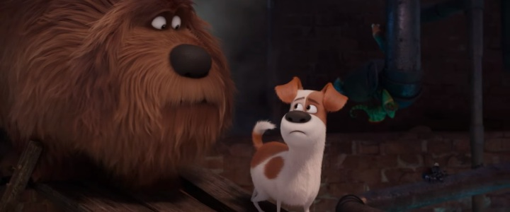 Puppy Love — The Secret Life of Pets Review